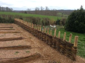 half way up weaving the willow fence